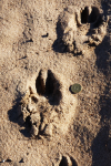 Just what story does the owner of these footprints have to tell?