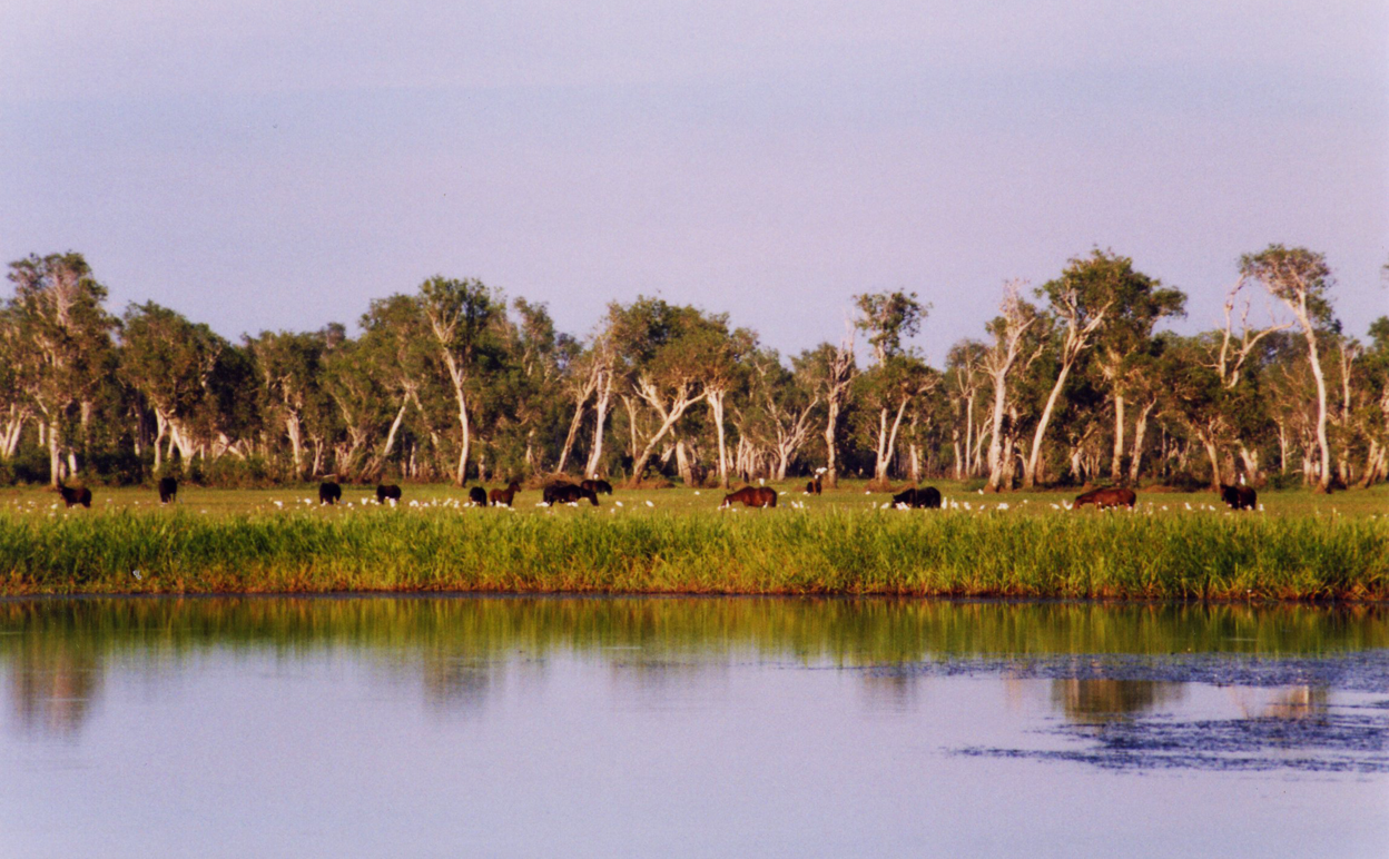 Kakadu National Park – our biggest and possibly most important national park – is a global conservation embarrassment. Image by Cgoodwin [CC-BY-3.0] via Wikimedia Commons