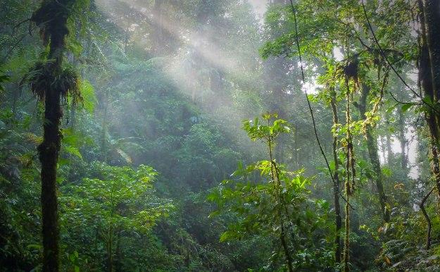 Morning in the rainforest.