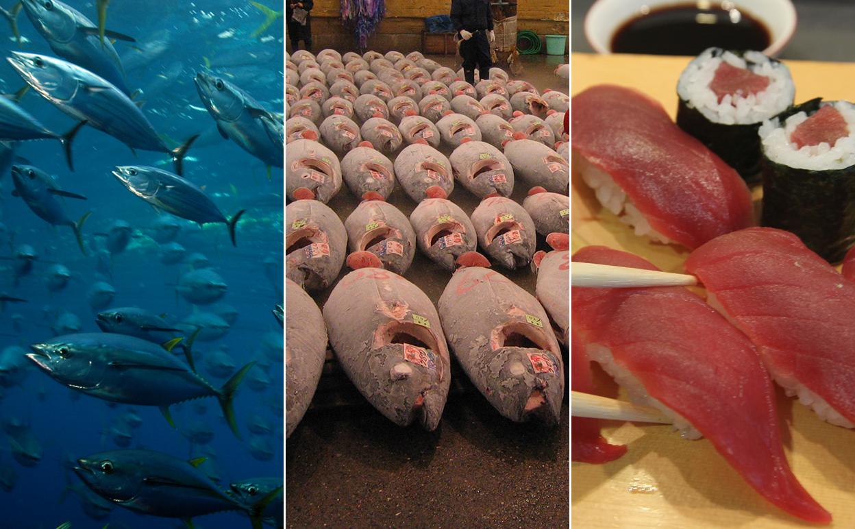 When a marine ecologist orders tuna sushi...