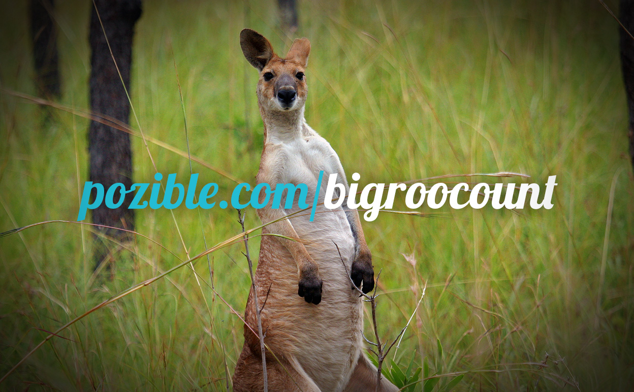 Help us conserve northern Australia's iconic mammals by supporting The Big Roo Count. Image credit: David Webb