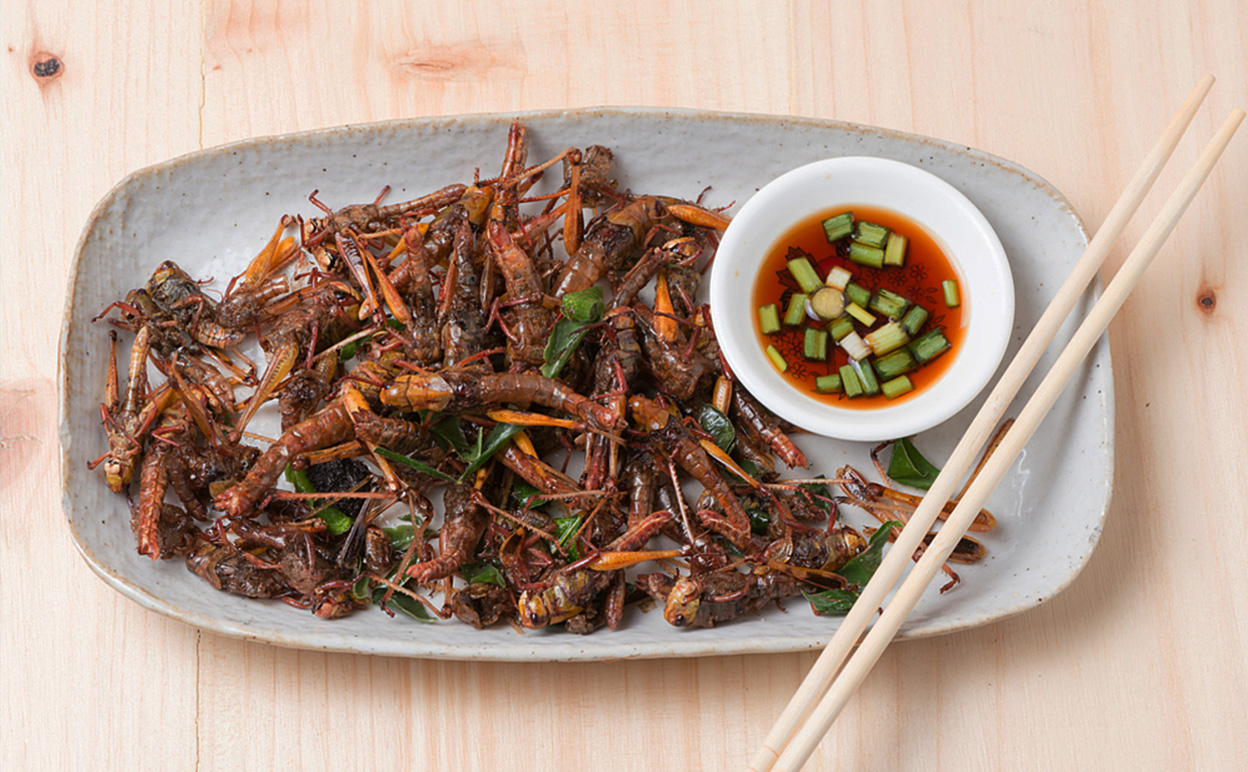 A six-legged diet? Insects are often high in protein and low in fat, and can be produced in large numbers, efficiently and quickly. Image credit Shutterstock
